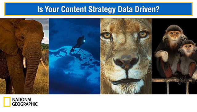 Is your content strategy data-driven by Kate Coughlin
